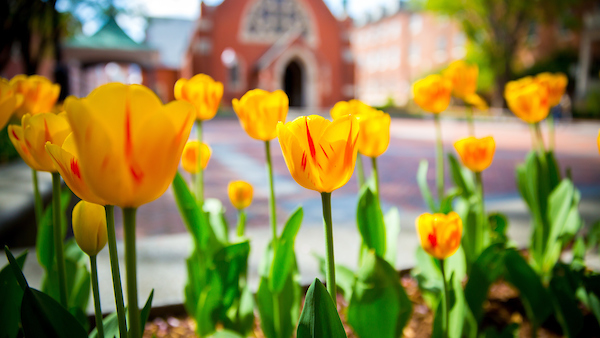 Tulips garden in front of the building
